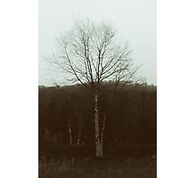 Birch Tree Society Photographic Print