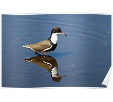 Reflected Wader Poster