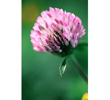 Clover Photographic Print