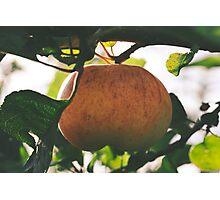 Apple Photographic Print