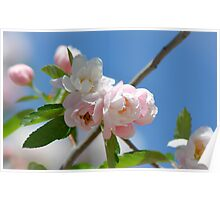Spring Blossom 10 Poster