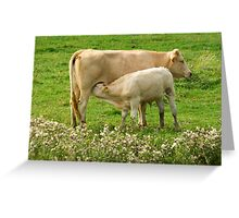 Cow with calf Greeting Card