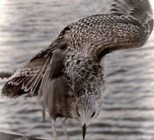 An Awkward Landing For A Gull by lynn carter