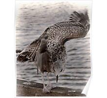 An Awkward Landing For A Gull Poster