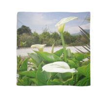 Three Cream Calla Lilies With Garden Background Scarf