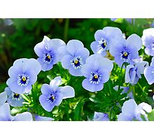 Blue Petals Photographic Print
