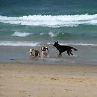 dog beach 8 by Zefira