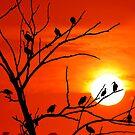 Sunset by kvlionphotos