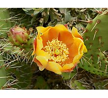 Beauty among the Thorns Photographic Print