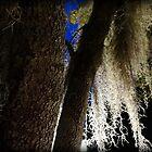 Spanish Moss by Debbie Robbins