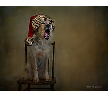 Deck the halls with howls of Collie Photographic Print