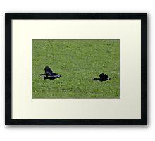 Jackdaw Squadron Framed Print