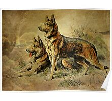 Vintage German Shepards Poster