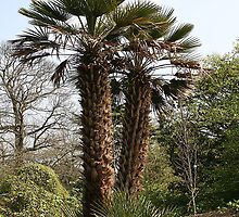 Palm Trees At kew gardens, London by edesigns14