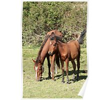 Brown Mare and Colt in a Meadow Poster