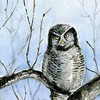 Northern hawk-owl by Redilion