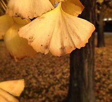 Ginkgo Biloba leaves in november by Luigi Masella
