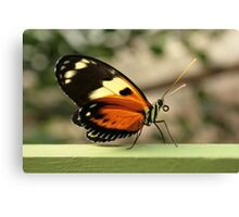 Orange Yellow and Black Butterfly Canvas Print