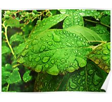 After the Rain - Leaf Poster