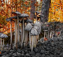 Stay Close Little Children ~ Wild Mushrooms ~ by Charles & Patricia   Harkins ~ Picture Oregon