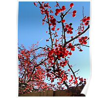 Red Berry Tree 1 Poster