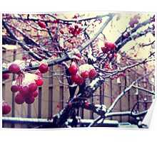 Berry Tree After The Snow Poster