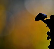 Brick cap Silhouette  by relayer51