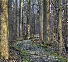 Winding Path  by Rich Fletcher