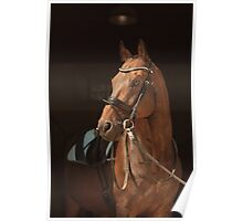 Pretty Horse Poster