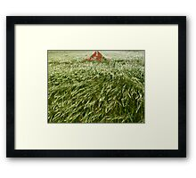 Hay field with poppies Framed Print