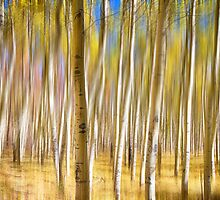 Surreal Aspen Tree Abstract by Bo Insogna