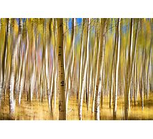Surreal Aspen Tree Abstract Photographic Print