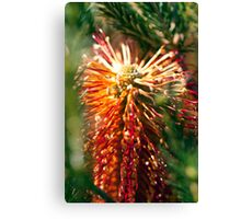 Glowing Bottle Brush Canvas Print