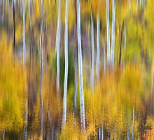 Surreal Aspen Tree Magic Abstract Art by Bo Insogna