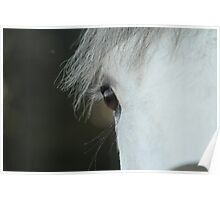 awww these horses's eyes Poster