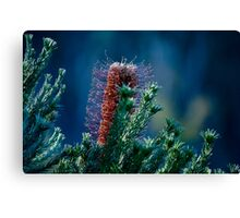 Bottle Brush Spotlight Canvas Print