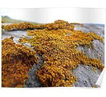 Orange Crust Poster
