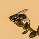 Morning Fly by Rick Playle