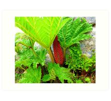 The Plant Life Of West Donegal Art Print