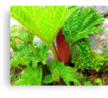 The Plant Life Of West Donegal Canvas Print