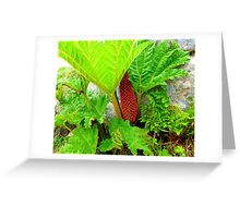 The Plant Life Of West Donegal Greeting Card