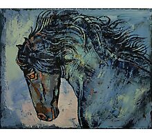 Friesian Stallion Photographic Print