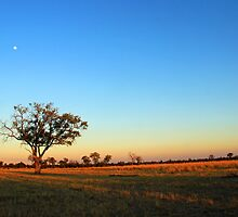 Savuti Morning by JenniferEllen