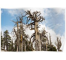 Skeletal Trees with Clouds Poster