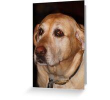 Molly3 Greeting Card