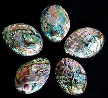 Paua Shells by lilysteele
