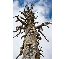 Skeletal Tree with Clouds Photographic Print