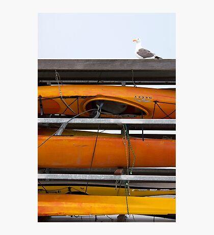 Seagull and Kayaks at AT&T Park San Francisco Photographic Print