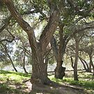 Griffith Park Trees 1 by donnagrayson