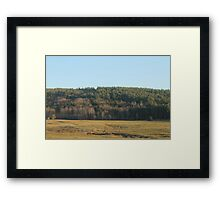 The fields of the cows Framed Print